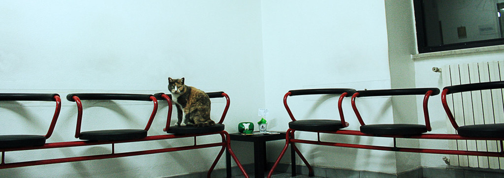 villa-felice-cat