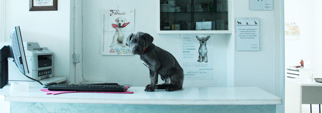villa-felice-dog