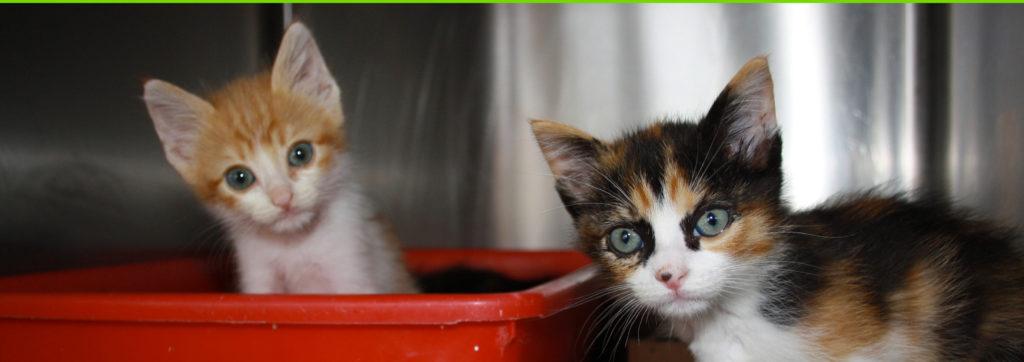 clinica-veterinaria-villafelice2